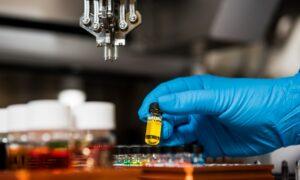 Biobots: descubre los robots vivos y biológicos hechos con células